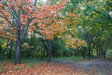 Multicolored  autumn alley in park.