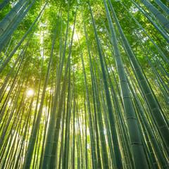 Poster Bambou Bamboo forest in Arashiyama