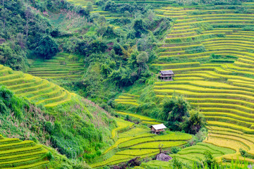 Photo sur Aluminium Vert Rice fields at Northwest Vietnam.