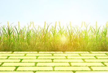 background ''grass and tile''.