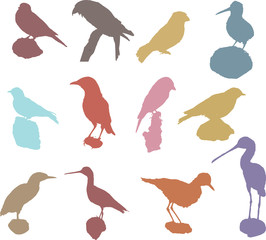 Collection of Vector Silhouette Birds