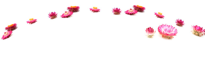 Flowers bright perspective. Flower composition. Autumn composition