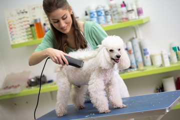 smiling woman haircut white poodle