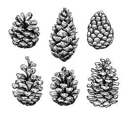 Pine cone set. Botanical hand drawn vector illustration. Isolate