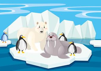 Wild animals in the North Pole