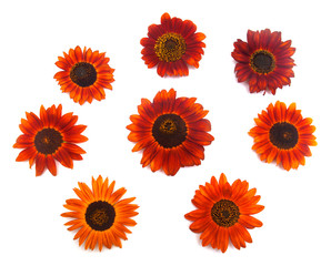 Wreath frame with red sunflowers isolated on white background