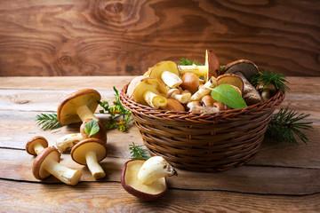 Forest picking edible mushrooms in wicker basket on wooden backg