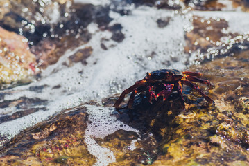 Wet sea crab on the stone. sunny summer day