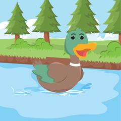 duck swimming vector illustration design