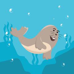 seal swimming on the sea