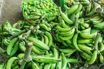 Group bunch of bananas in green at Nicaragua farmer market, an agriculture product, tropical fruit