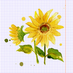The composition of yellow sunflower painted in watercolor
