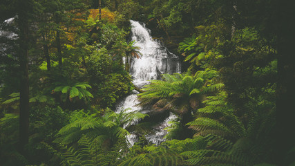 Deurstickers Jungle Wasserfall Triplet Falls im Regenwald an der Great Ocean Road in Australien