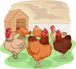 Free Range Chicken Coop