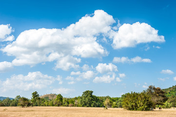 Meadow under the blue sky and white clouds.