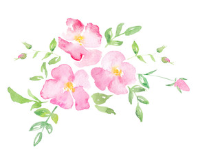 Watercolor wild rose - hand drawn illustration