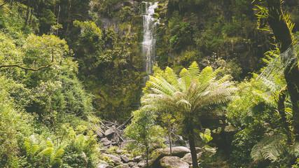 Farnwald bei den Erskine Falls an der Great Ocean Road in Australien