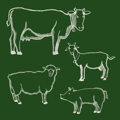 Hand drawn images of farm animals