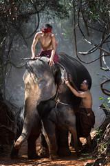 The family of elephants