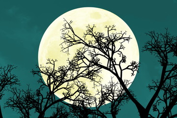 beautiful bright full moon rise behind tree branches