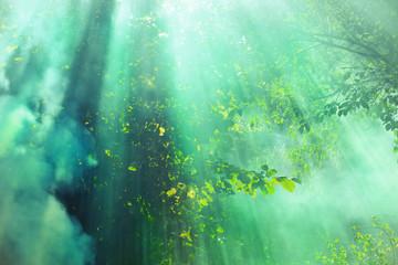 Obraz Promienie słoneczne padające na drzewa - fototapety do salonu