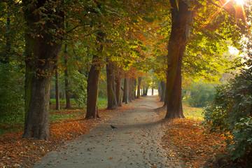 Fototapeta Jesień w parku obraz