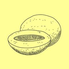 Vector melon.