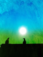Silhouette of pigeons on a roof