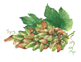 Bunch of fresh grapes. Hand drawn watercolor painting on white background.