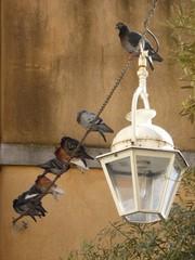 Pigeons perchés sur une chaîne