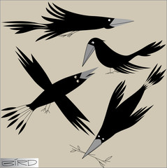 graphic image of birds