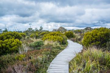 Winding boardwalk among native vegetation in Hartz Mountains National Park, Tasmania, Australia