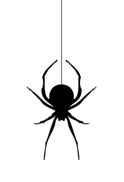 Vector Spider Silhouette
