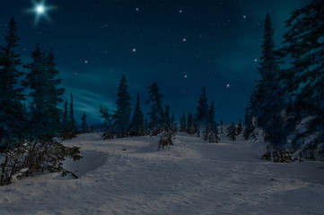 spruce forest night snow stars