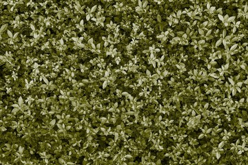 natural textured background of khaki color
