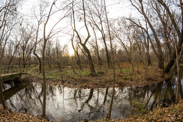 Late autumn in the park with beautiful, colorful leaves. Fisheye lens effects