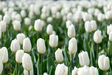 Spring in Vodelpark