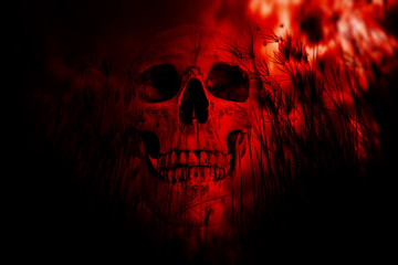 Human skull in the woods,Horror Background For Halloween Concept And Movie Poster Project