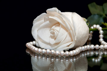 White Rose pearl black background