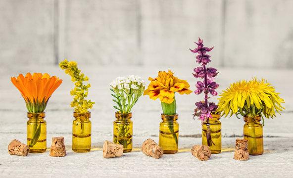 drugs herbs extract in small bottles (calendula, Basil, yarrow, dandelion, marigold, goldenrod).