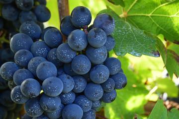 Cabernet Sauvignon for red wine