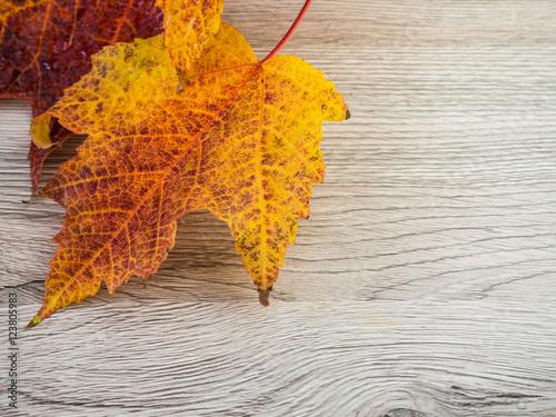 Herbstblätter Vorlage Stockfotos Und Lizenzfreie Bilder Auf Fotolia