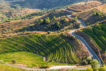 Road along the vineyard in the Comarca Priorat is a famous wine-growing area where the prestigious wine of the Priorat and Montsant is produced. Wine has been cultivated here since the 12th century Fototapete