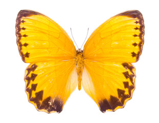 Beautiful colorful butterfly isolated on white