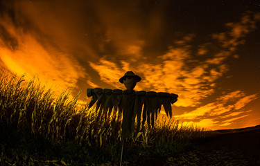 Scarecrow in the cornfield