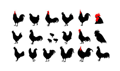 Set of vector rooster silhouettes on the white background.