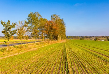 Polish rural landscape with autumnal fields at good weather