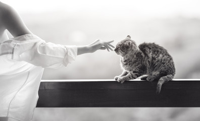 Sexy beautiful girl playing with a cat on a veranda