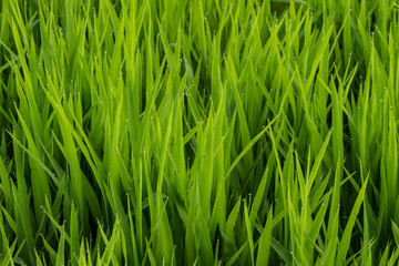 Obraz trawa - fototapety do salonu