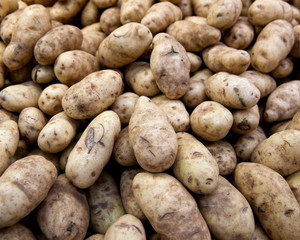 Raw organic potatoes in local farmers market store